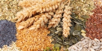 Variety of edible seeds with ripe golden ears of wheat including whole and dehusked sunflower, sesame, poppy, linseed, pulses and legumes - Стерлитамакский рабочий